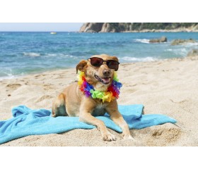 S.O.S. caldo: come aiutare i nostri animali durante l'estate